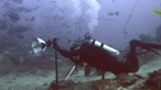 Flash Photographing Sharks